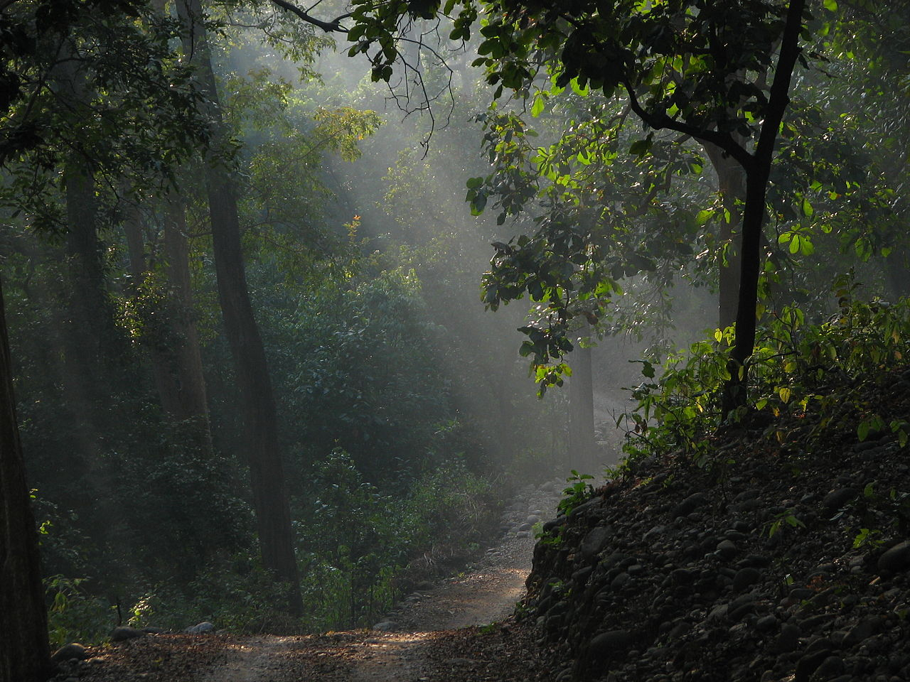 Inside Corbett National Park