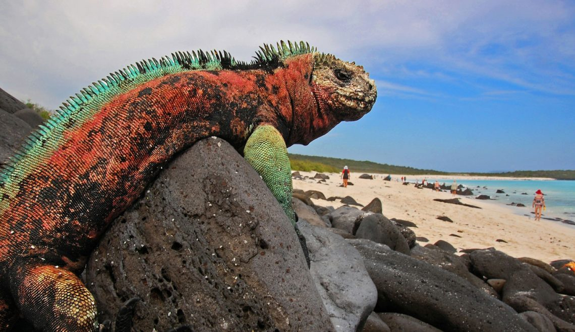 Insiders View on Galapagos Islands
