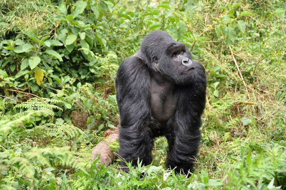 Insider's View on Rwanda